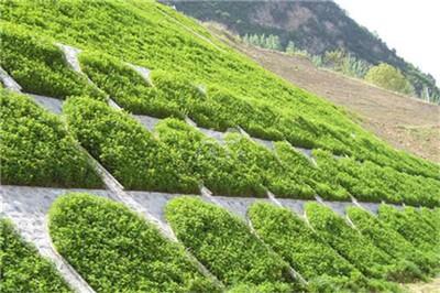 Best price hydroseeding for road greening